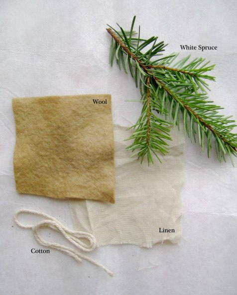 White Spruce Dye Test